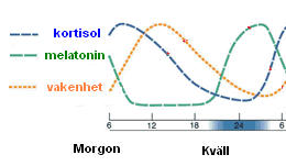 sömnproblem hormoner melatonin kortisol