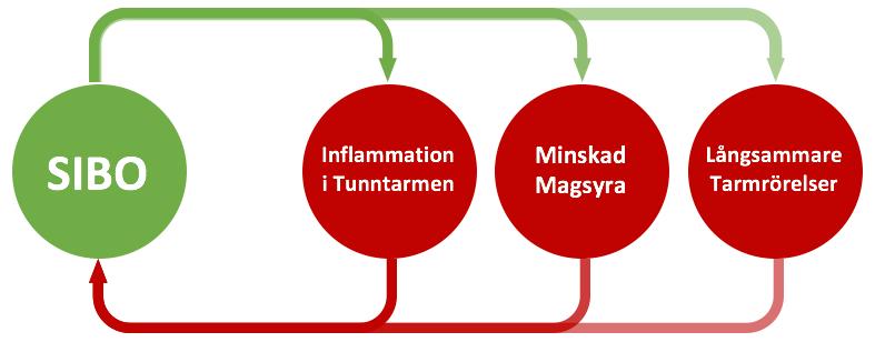 inflammation i tunntarmen